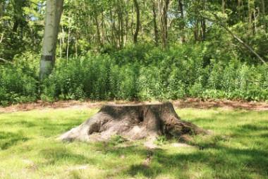 tree stump in the ground