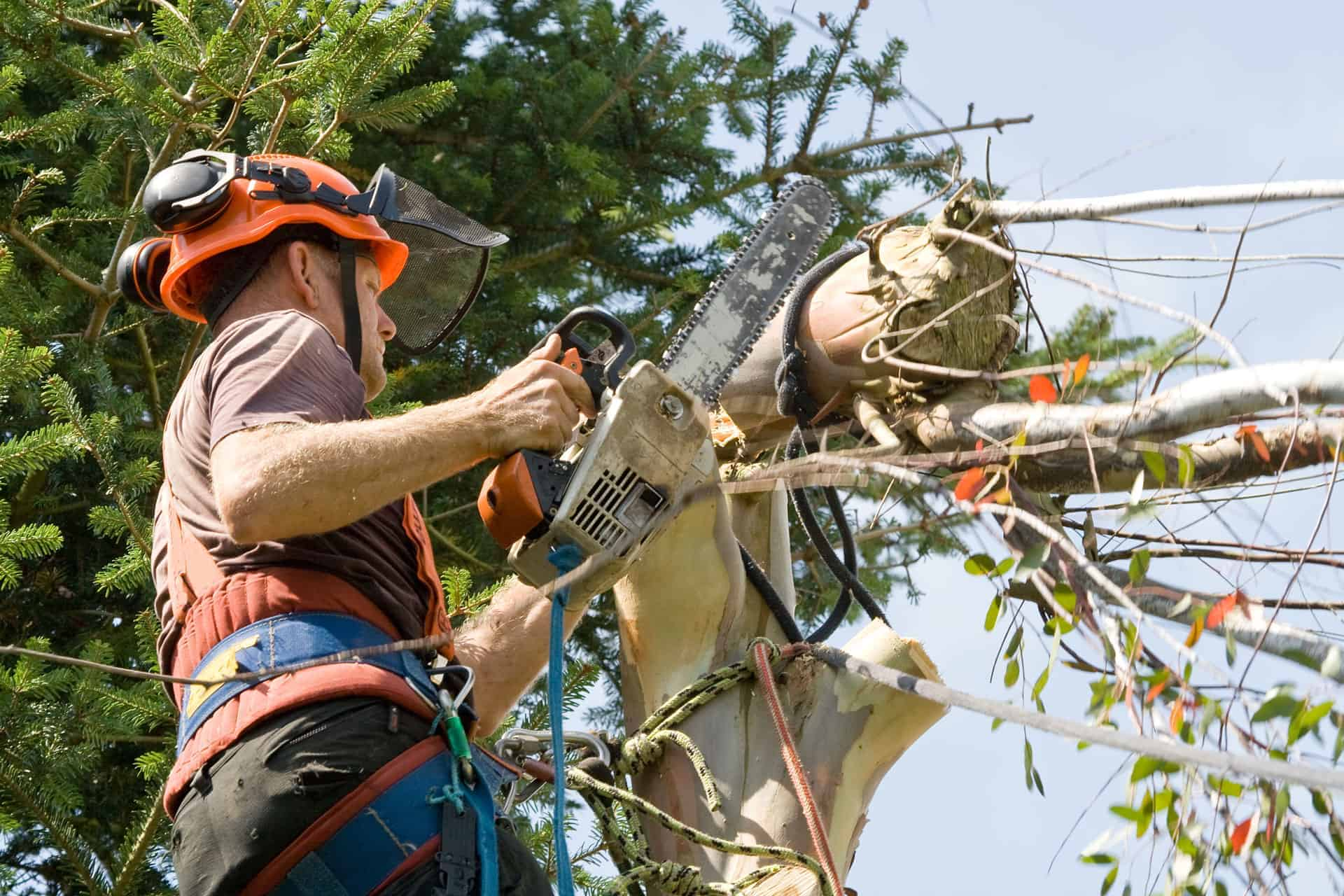 man cutting large branches using a chainsaw