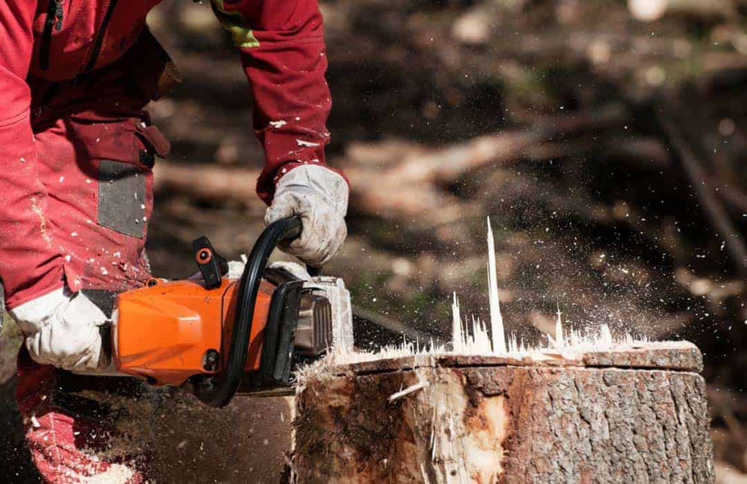 cutting down the stump of a large tree using a chainsaw